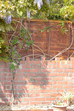 gallery/clematis trellis whole